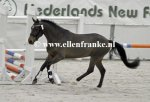 210215224 Hooghei's King (Hogenhof's Alwin x Make My Day).JPG